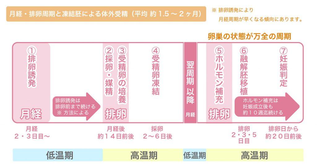 月経・排卵周期と凍結胚による体外受精の流れ図説 - 名古屋不妊治療山口レディスクリニック